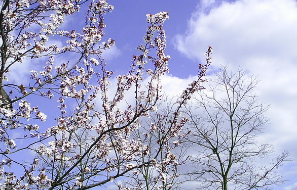 Vårens program på sta'n!